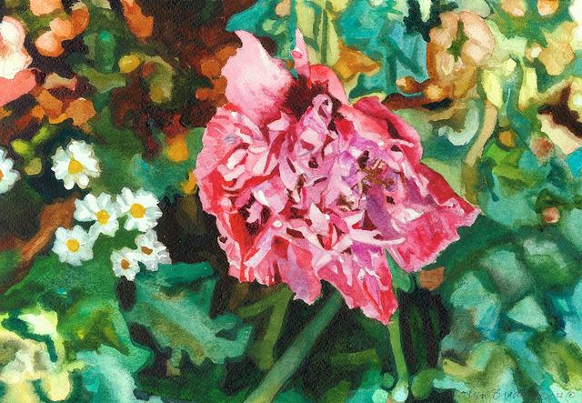 , 'Violet Pink Garden Poppy,' 2004, Nancy Hoffman Gallery