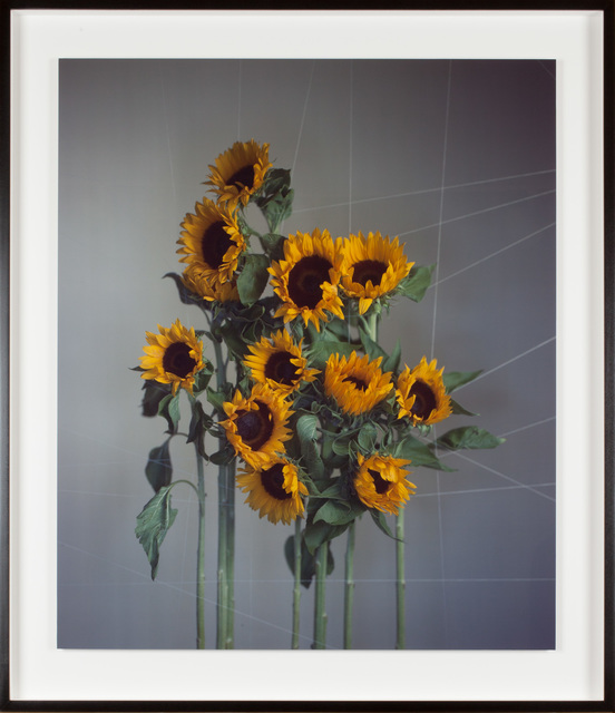, 'Large sunflowers,' 2018, Fraenkel Gallery