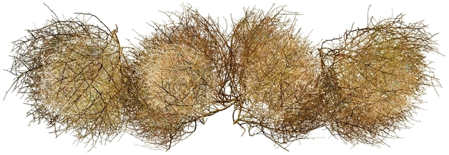 , 'Tumbleweed,' 2015, J GO Gallery