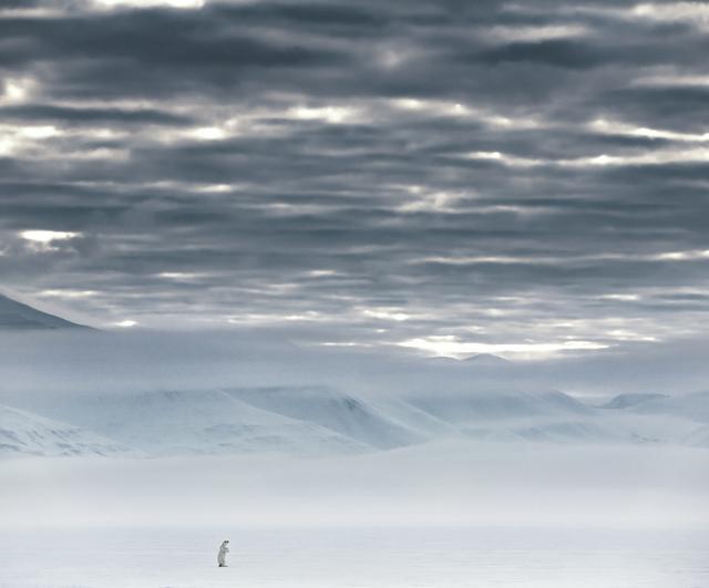 David Yarrow, 'The North Remembers', 2019, Fineart Oslo