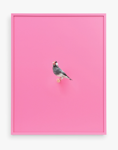 , 'Java Rice Finch (Bubble Gum),' 2017, ClampArt
