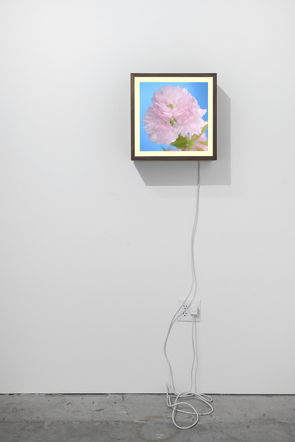 , 'Cherry,' 2015, Casemore Kirkeby