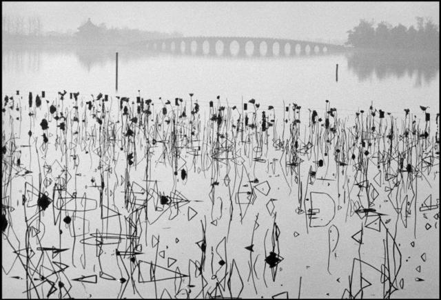 , 'Former Summer Palace. Dead lotus flowers on the Kunming Lake. Beijing, China. ,' 1964, Magnum Photos