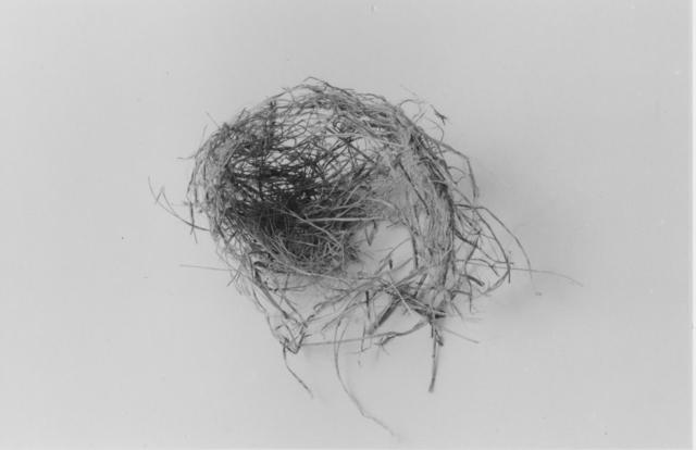 , 'The End (Nest One),' 1999, John Davis Gallery