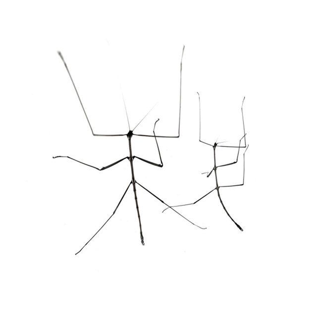 , 'Untitled,' , Mondo Galería