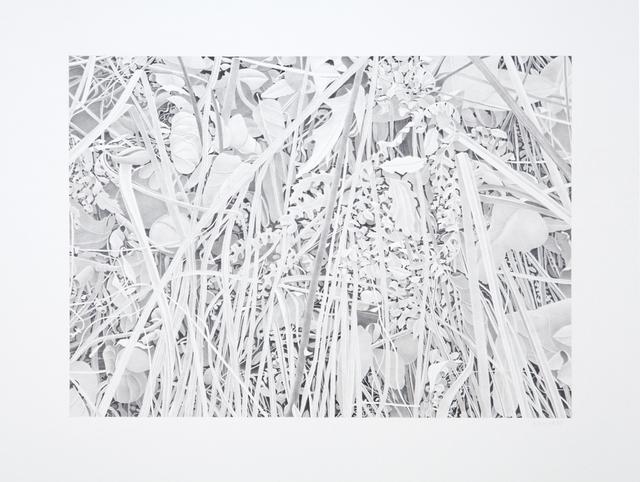 Bill Richards, 'Reeds and Ferns', 2013, Nancy Hoffman Gallery