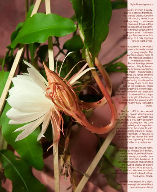 , 'Night Blooming Cereus,' 2015, Space 776