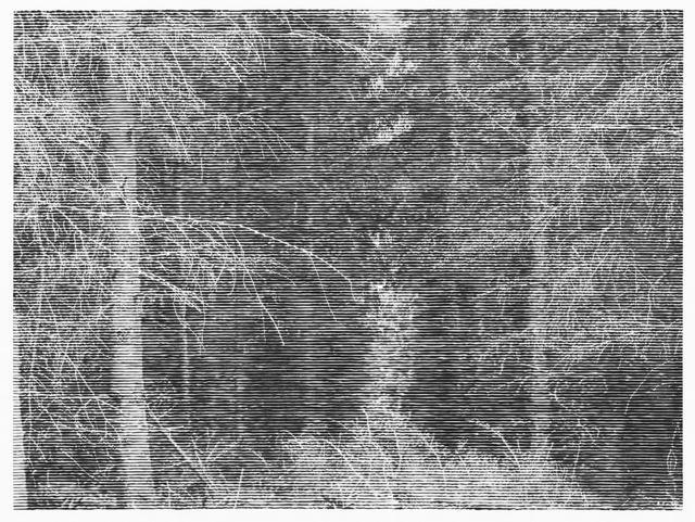 , 'Wald bei Colditz VI,' 2014, Cristea Roberts Gallery