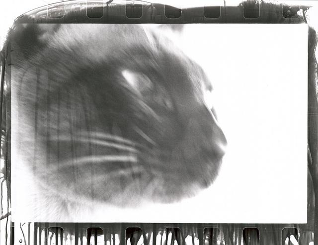 , 'Cat,' 1980, Galerie Peter Sillem
