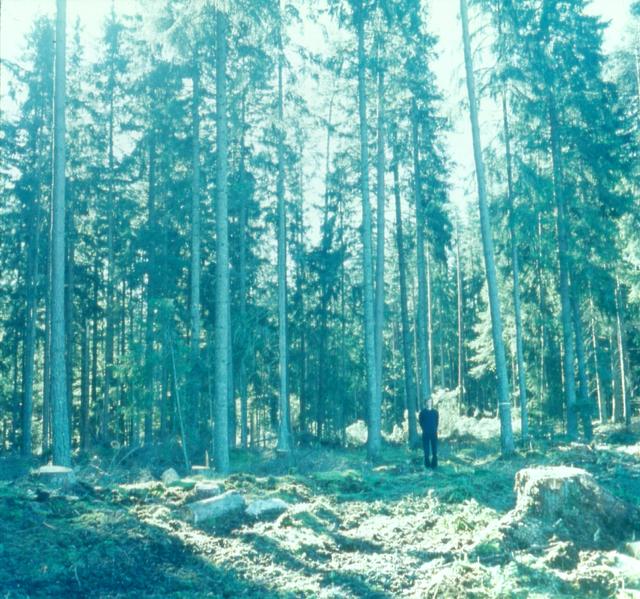 Bas Jan Ader, 'Untitled (Swedish Fall)', 1971/2003, Photography, 2 C-type prints, Meliksetian | Briggs