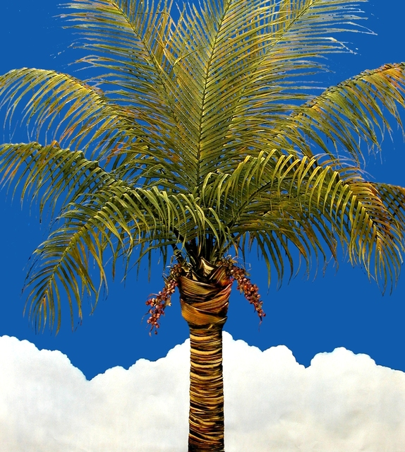 , 'Bahama,' 2012, HOHMANN