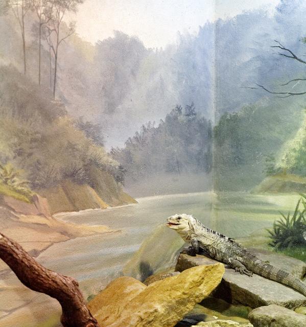 , 'Iguana and Lake,' 2015, Galerie Dumonteil