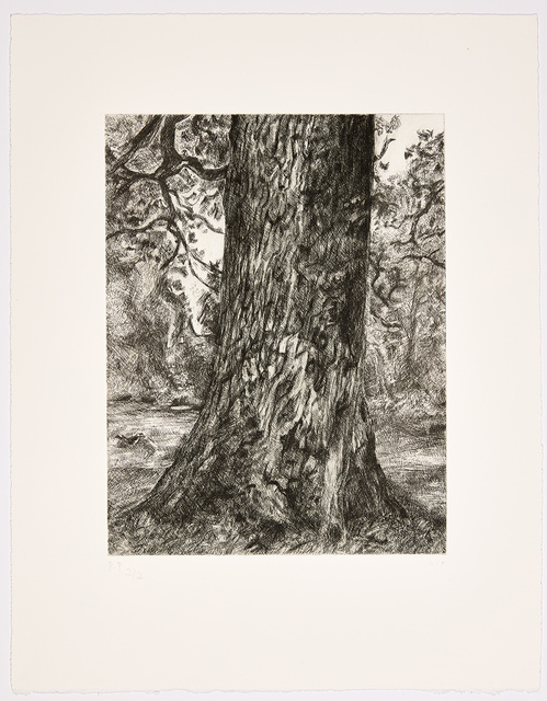 Lucian Freud, 'After Constable's Elm', 2003, Print, Etching, Marlborough London