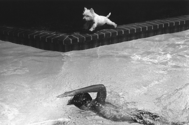 Paul Greenberg, 'Swimmer & White Dog', ca. 1982, PDNB Gallery