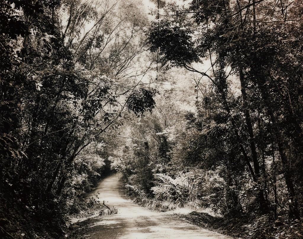 Paradise 8 (Blumfield Track), Daintree, Australia
