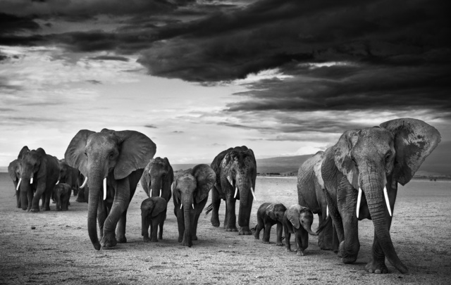 David Yarrow, 'Family', ca. 2012, Isabella Garrucho Fine Art