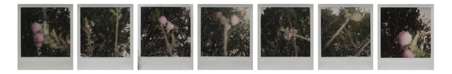 , 'Peach Blossom series ; set of 7 original works,' 2007, Juliette Culture and Art Development Co. Ltd.