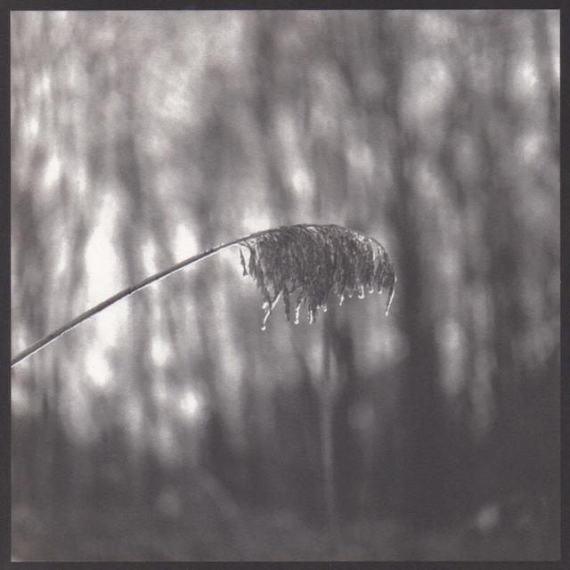 Denise Oehl, 'Weeping Weed', 2018, John Davis Gallery
