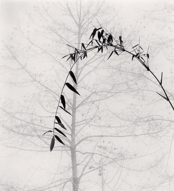 , 'Bamboo and Tree, Qingkou Village, Yunnan, China.,' 2013, Blue Lotus Gallery