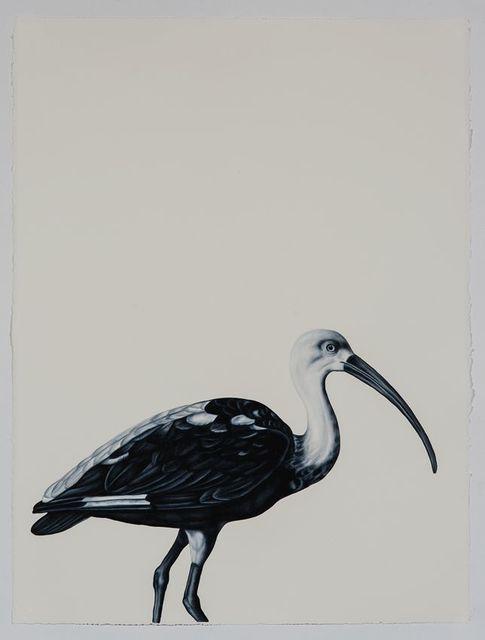 , 'Scarlet Ibis (after Werner),' 2016, Sears-Peyton Gallery