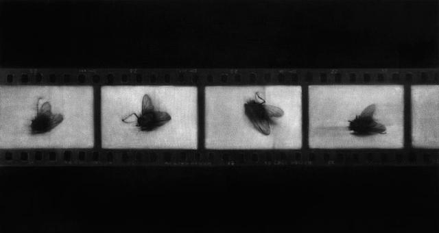 , 'Mal de archivo,' 2014, Rosa.Santos