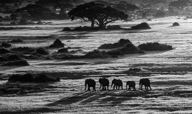 David Yarrow, 'Dawn Commute', 2014, Hilton Asmus