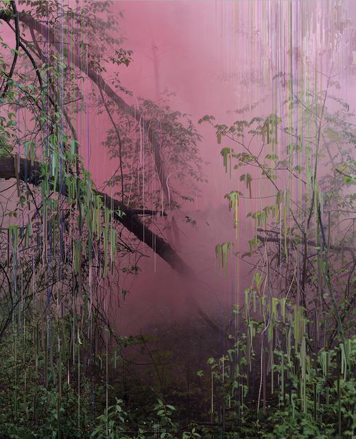 Sandra Kantanen, 'Untitled (Forest 17)', 2019, Bryce Wolkowitz Gallery