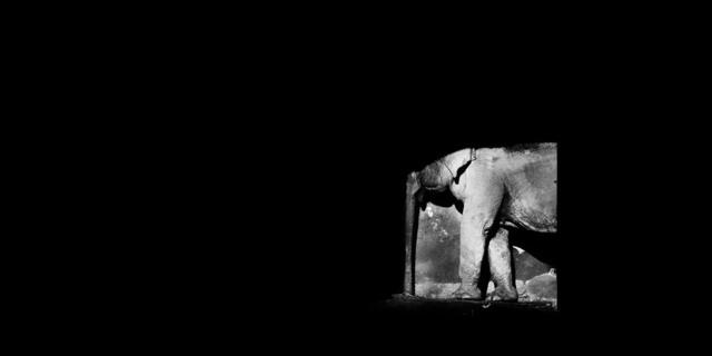 , 'La elefanta sombra,' , EL GRAN VIDRIO