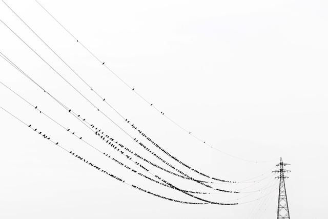 , 'Kawau 006,' 2015, IBASHO