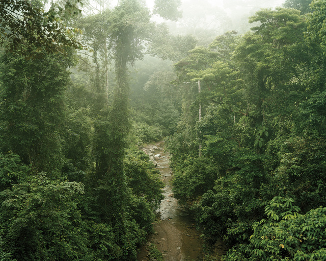 , 'Primary Forest 11, Malaysia,' 2012, Galerie f5,6