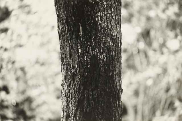 , 'P. W. – No.70,' 1983, Taka Ishii Gallery