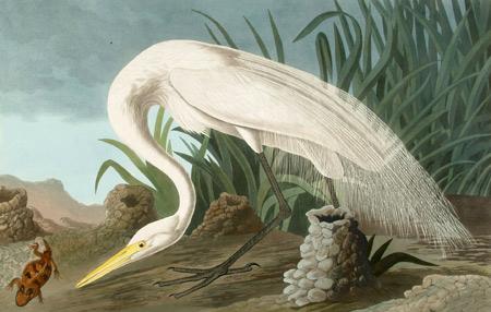 John James Audubon, 'White Heron', 1837, Kiechel Fine Art