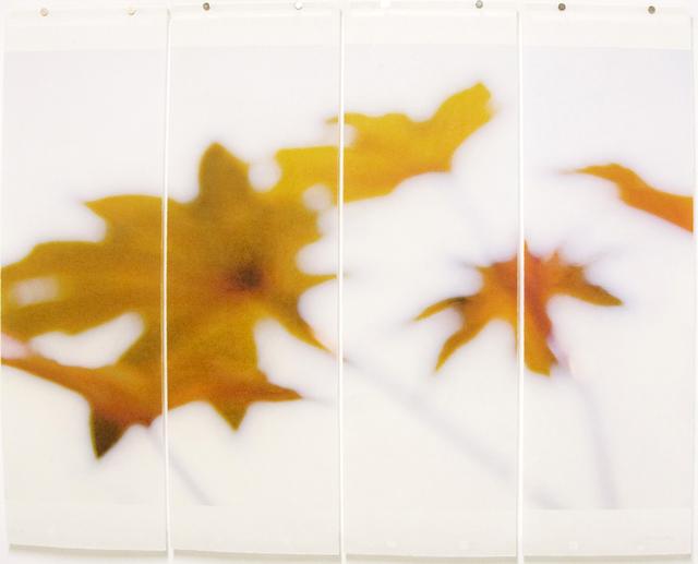 Jeri Eisenberg, 'Ornamentals, No. 2', 2008, Kathryn Markel Fine Arts