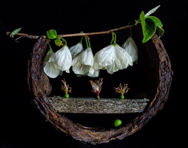 , 'Silver Bells for Meryl,' , Soho Photo Gallery