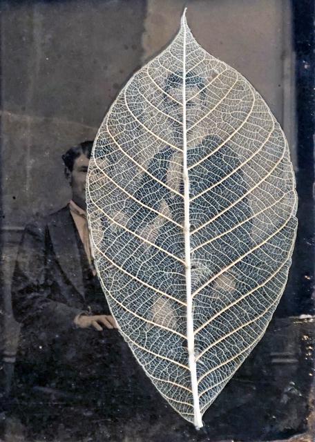 , 'Leaf,' , form & concept