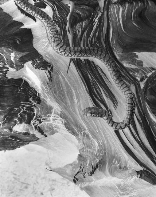 , 'Snake (negative),' 1929, Gallery 270