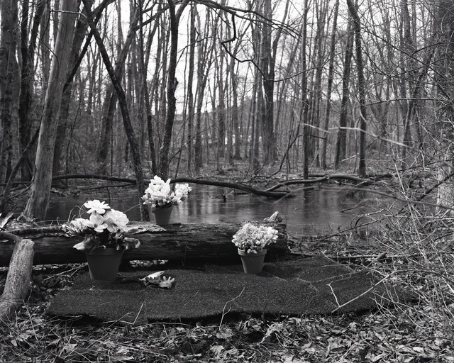 , 'Fool's Paradise (Swamp),' 2019, Alpha Gallery