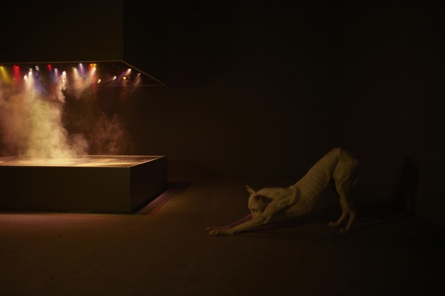 , 'Installation view of the exhibition, Pierre Huyghe, at the Centre Georges Pompidou,' September 2013 – January 2014, Los Angeles County Museum of Art