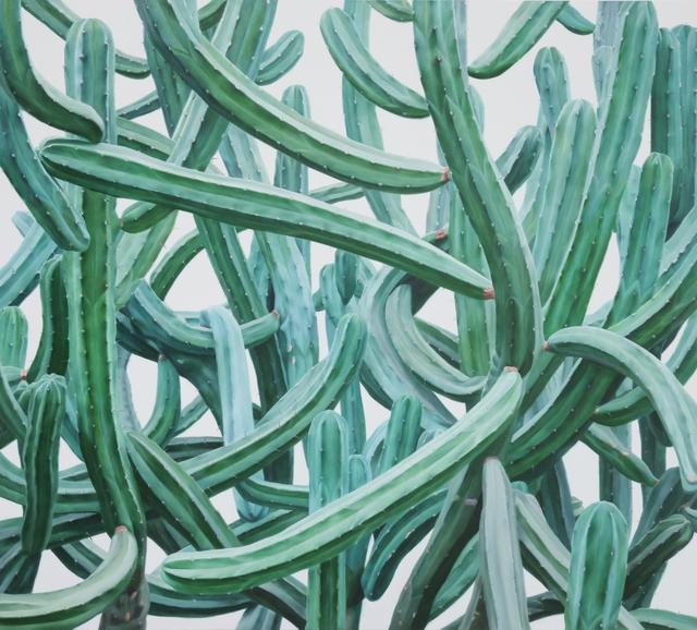 , 'Cactus No.66,' 2011, Johyun Gallery