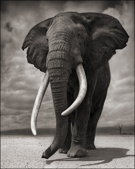 , 'Elephant on Bare Earth, Amboseli,' 2011, Edwynn Houk Gallery