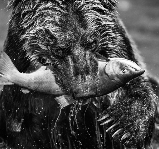 David Yarrow, 'Primeval', 2017, Maddox Gallery