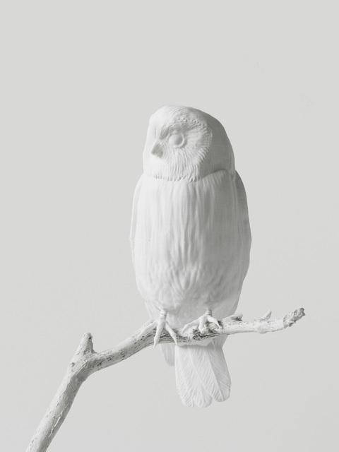 , 'Lost to Sight (Sceloglaux albifacies - front),' 2019, Galleria Heino