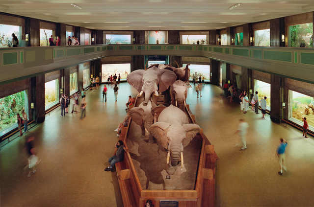 , 'American Natural History Museum, New York,' 2006, Dominik Mersch Gallery