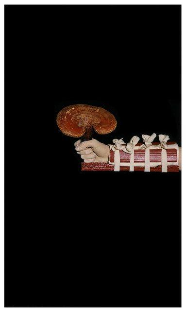 , 'Medicinal Lingzhi Fungus ,' 2000, MIYAKO YOSHINAGA