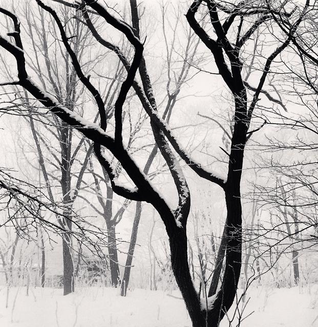 , 'Kawayu Forest, Study 3, Hokkaido, Japan,' 2014, G. Gibson Gallery