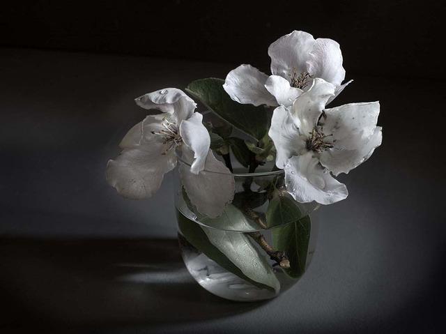, 'Flowers of quince (Edition 15 copies) ,' , Galería Marita Segovia