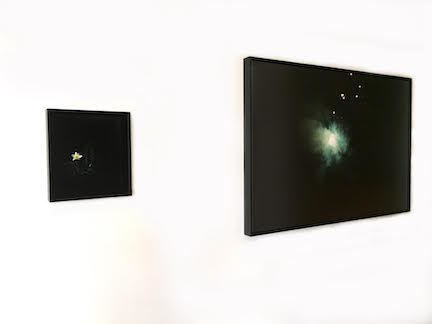 Installation image of Bloom & Evermore in Amanda Marchand: Night Garden.