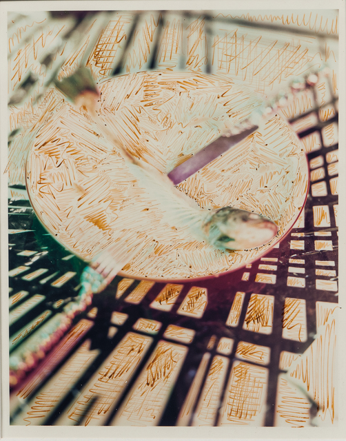 Lucas Samaras, 'Still Life', Skinner
