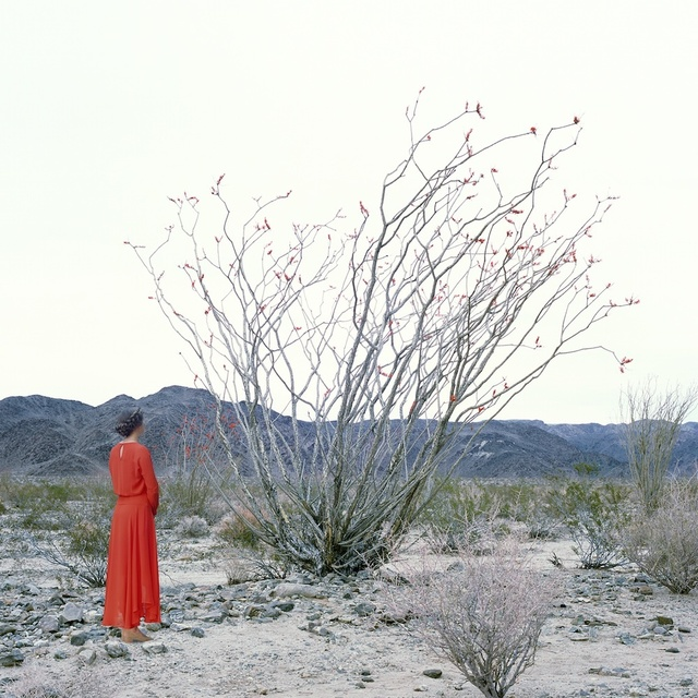 , 'Woman and Ocotillo Tree,' 2016, Monte Clark Gallery