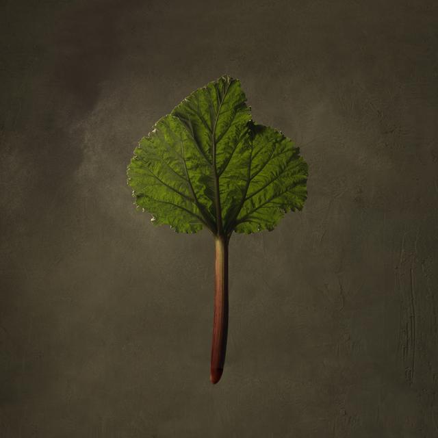 , 'Rhubarb,' , SmithDavidson Gallery